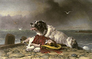 Landseer Saved